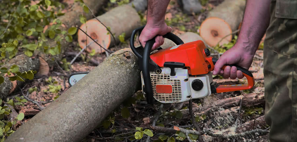 Tree Surgeon Swindon and Wiltshire