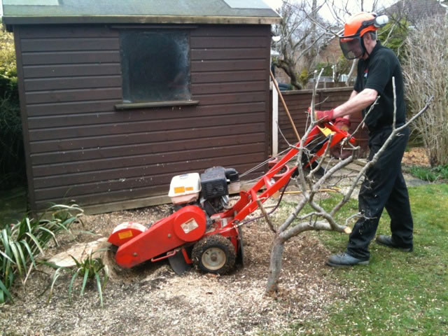 Skis Trees Tree Surgeon Swindon