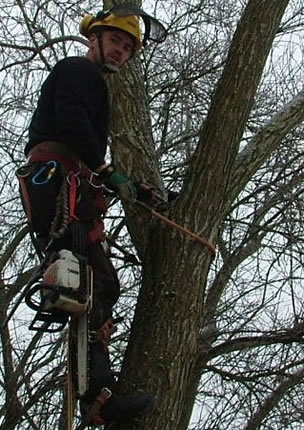 Neil at Skis Trees up a tree - pruning & trimming branches - Tree Surgeon Swindon