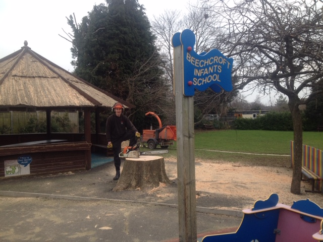tree removal at school in Swindon