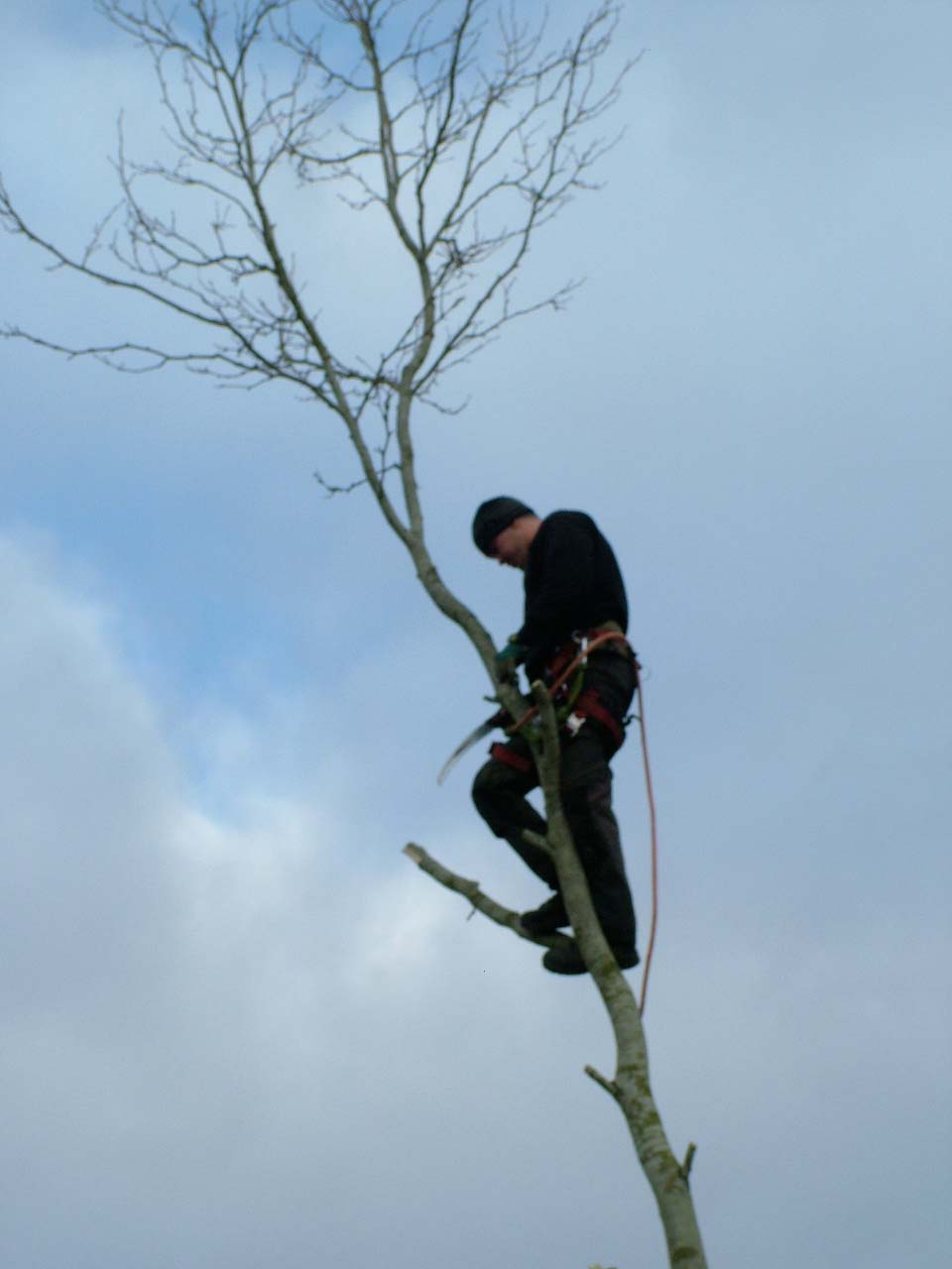 Swindon Tree Surgeon Neil up a tree