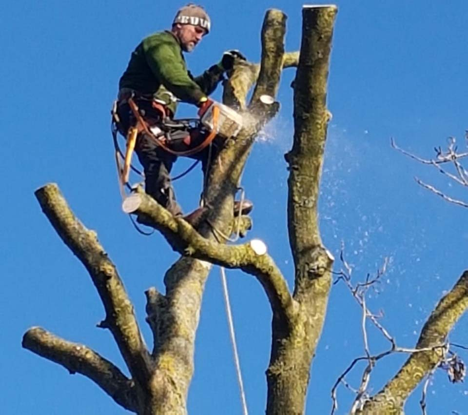 tree surgeon Neil up a tree