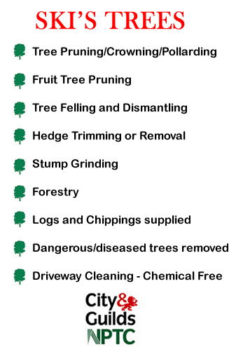 Tree Surgeon Services Swindon - Tree Felling and Dismantling, Fruit tree Pruning, Hedge Trimming, Stump Grinding. Forestry, Logs for sale, Driveway Cleaning